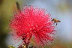 【蜜蜂知识】中蜂什么时候开始春繁?