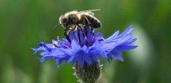 【蜜蜂知识】蜂王出台几天分蜂?