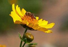 无王简单分蜂法