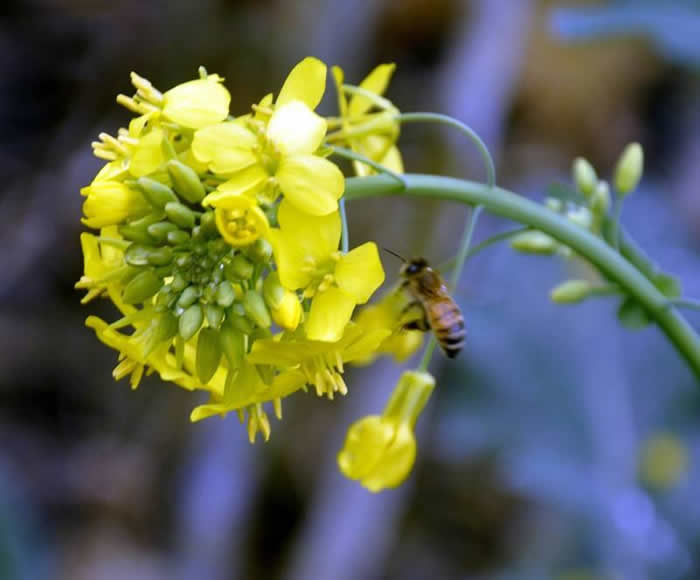 挖好的诱蜂洞怎么处理?