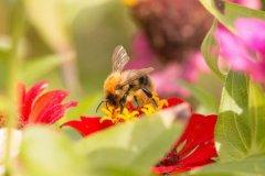 【蜜蜂知识】蜜蜂的资料有哪些内容?