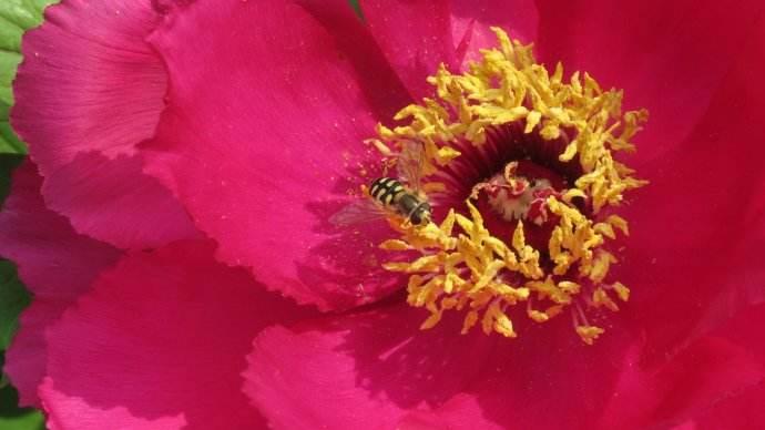 蜜蜂的养殖技术有哪些?