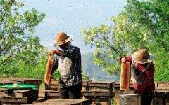 【蜂蜜价格】土蜂蜜价格大概多少钱一斤?