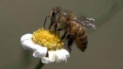 【蜂蜜吃法】糖尿病人能吃蜂蜜吗?