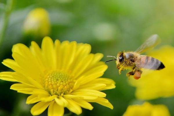 蜜蜂夏季管理养殖技术
