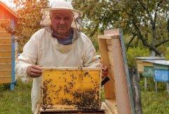 工蜂拖幼虫是什么原因?