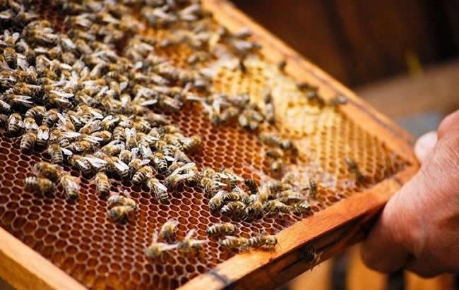 蜜蜂的社会结构视频