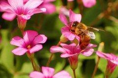 【蜜蜂知识】我国有多少群蜜蜂?