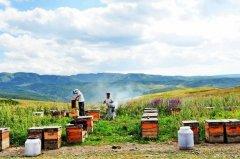 【蜜蜂知识】我国哪里养蜂人最多?