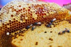 封盖成熟蜂蜜与未封盖蜜的区别?