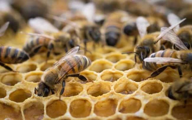如何估算蜂群群势?