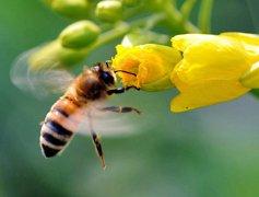 如何让蜜蜂安全度过夏天?