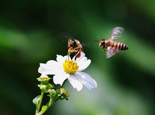 工产群怎样找到工产蜂