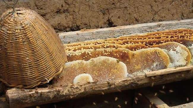 什么是土法养蜂技术?