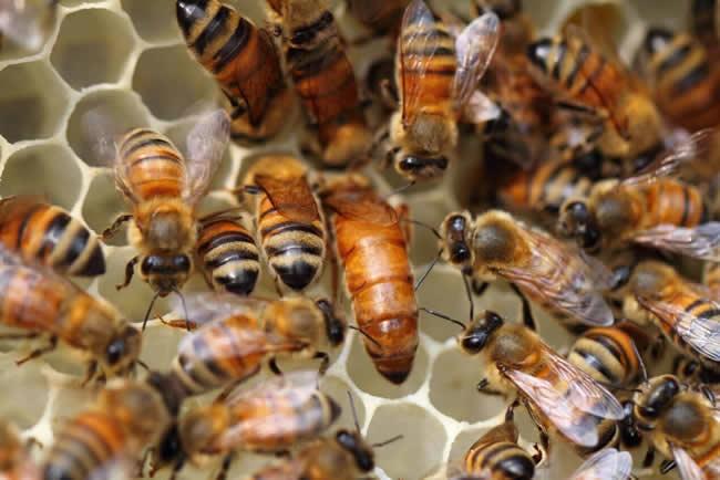 一张蜂脾有多少蜂蜜