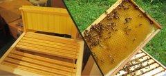 蜜蜂巢础有什么作用?