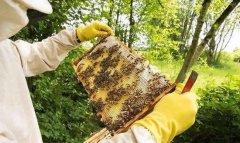 一脾蜂有多少只蜜蜂