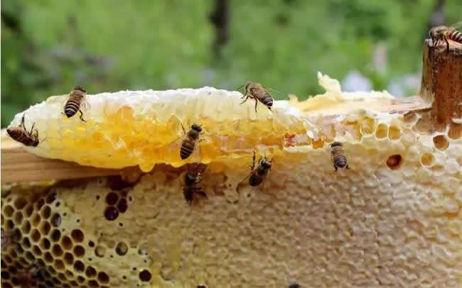 蜂蜜什么时候取最合适