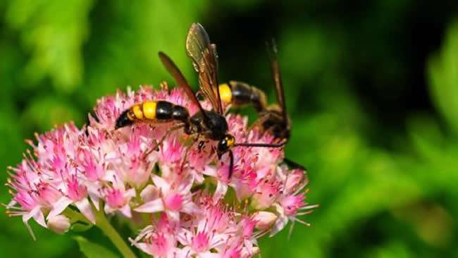马蜂喜欢吃什么东西