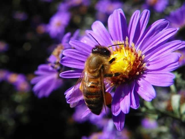 初学养蜂入门