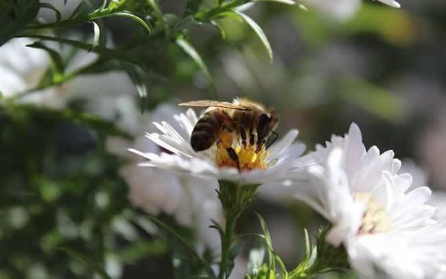 怎么区分工蜂和蜂王