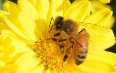在自家阳台有哪些养蜂方法?