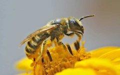 在哪里可以学养蜂技术?