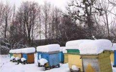蜜蜂过冬的方式有哪些?