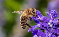 零下多少度会冻死蜜蜂