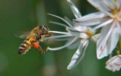 定地养100箱蜜蜂的利润是多少?
