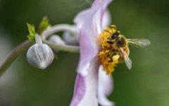 2019年养10箱蜜蜂一年能赚多少钱?