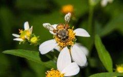 越冬蜂缺蜜怎么办?