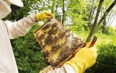 如何掌握蜜蜂的蜂脾关系?