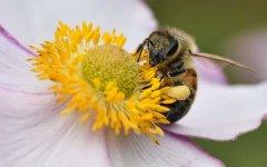 工蜂如何喂蜂王?