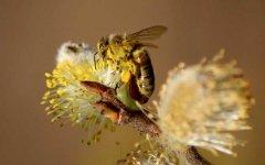 新手养蜂入门及注意事项