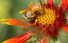 如何制止工蜂产卵?