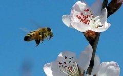 工蜂是雌性还是雄性?
