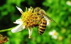初学养蜂步骤及方法