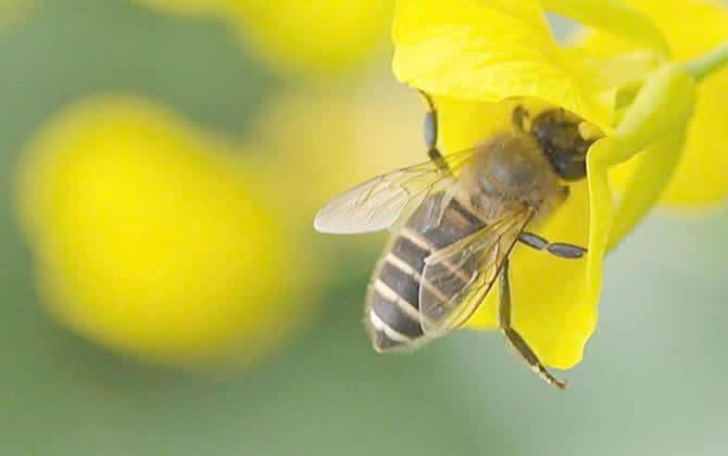 胡蜂蜂王死了的表现