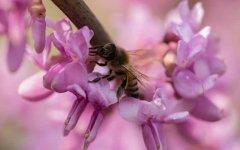 新手如何养蜜蜂?