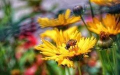 野生蜜蜂怎样抓回家养?(附带具体方法步骤和流程)