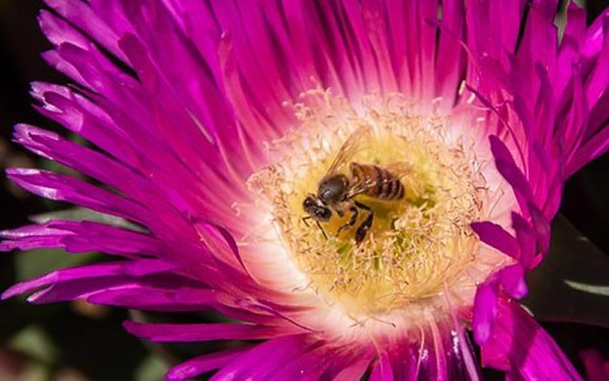 中蜂蜂箱内的最高温度是多少(蜜蜂箱内温度多少为宜)