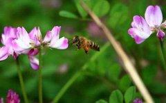 蜜蜂养殖如何防止分蜂?