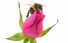 侦查蜂诱蜂来蜂的征兆?