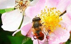 蜜蜂养殖要多少投资钱?