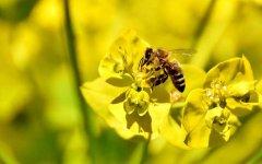 被土蜂蛰了怎么处理?