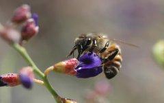 养蜂人如何防止逃蜂出现?