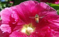 蜂群管理技术之巢门管理