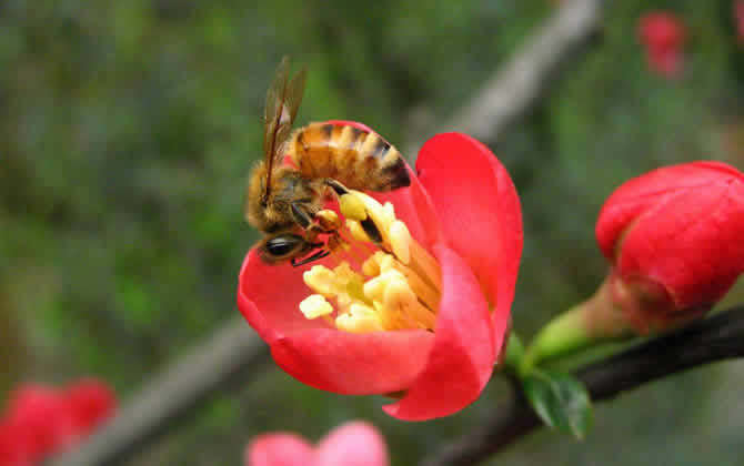 如何进行分蜂?