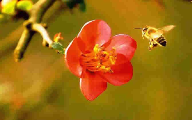 如何进行分蜂
